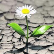 yellow-desert-flower---180